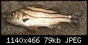 Click image for larger version\r\n\r\nName:	Philippine sea fish.jpg\r\nViews:	4839\r\nSize:	79.3 KB\r\nID:	893
